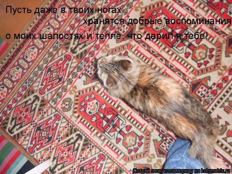 Котоматрица: Пусть даже в твоих ногах  хранятся добрые воспоминания о моих шалостях и тепле, что дарил я тебе!