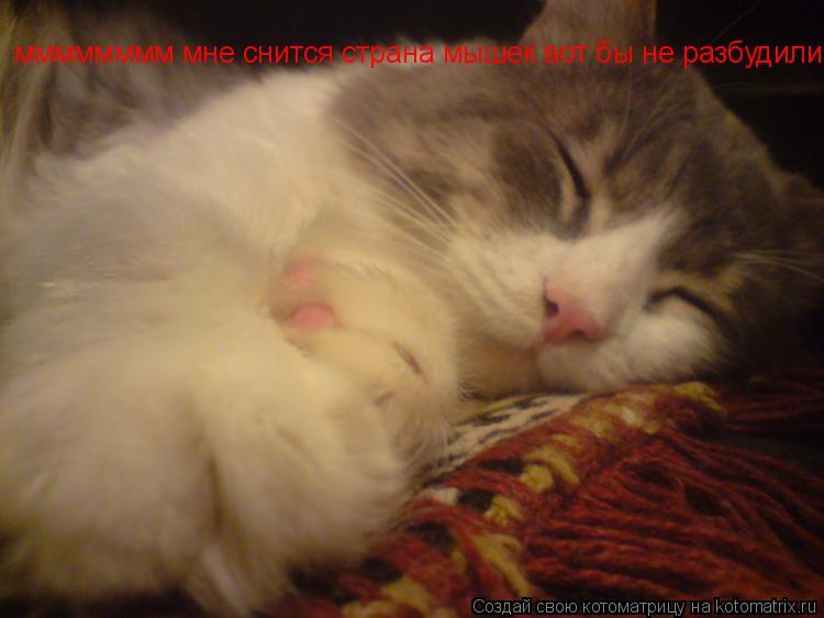 Котоматрица: мммммммм мне снится страна мышек вот бы не разбудили во время работы!