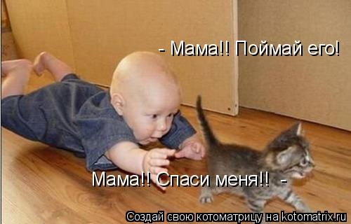 Котоматрица: Мама!! Спаси меня!!  - - Мама!! Поймай его!