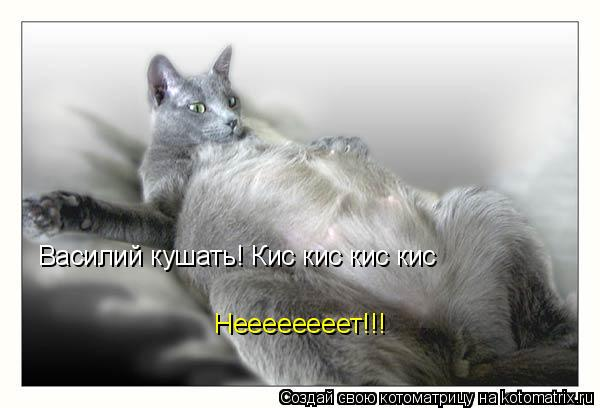Котоматрица: Василий кушать! Кис кис кис кис Неееееееет!!!