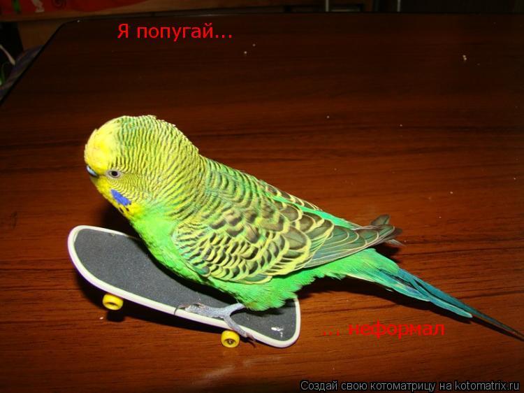 Котоматрица: Я попугай... ... неформал