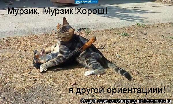 Котоматрица: Мурзик, Мурзик!Хорош! я другой ориентациии!