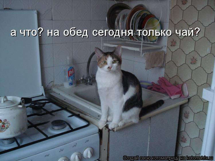 Котоматрица: а что? на обед сегодня только чай?