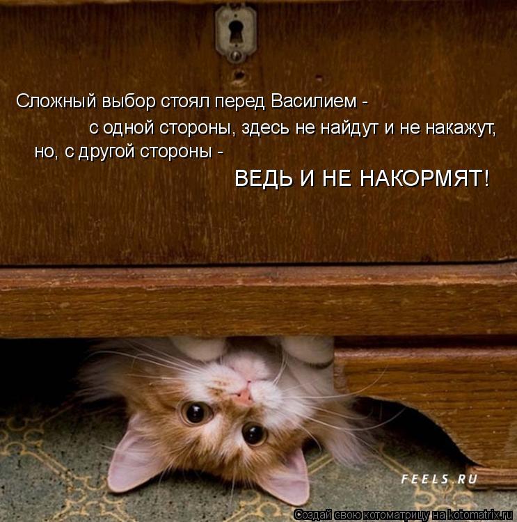 Котоматрица: Сложный выбор стоял перед Василием -  с одной стороны, здесь не найдут и не накажут, но, с другой стороны -  ВЕДЬ И НЕ НАКОРМЯТ!