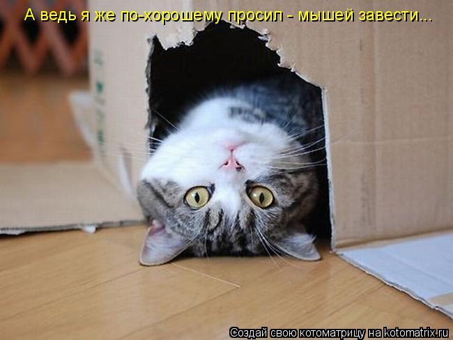 Котоматрица: А ведь я же по-хорошему просил - мышей завести...
