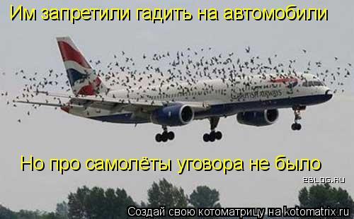 Котоматрица: Им запретили гадить на автомобили Но про самолёты уговора не было