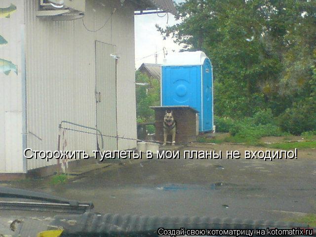 Котоматрица: Сторожить туалеты в мои планы не входило!