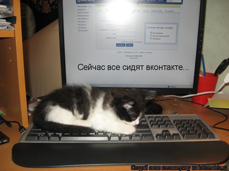 Котоматрица: Сейчас все сидят вконтакте...