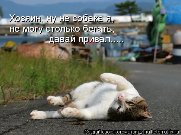 Котоматрица: Хозяин, ну не собака я, не могу столько бегать, давай привал.....