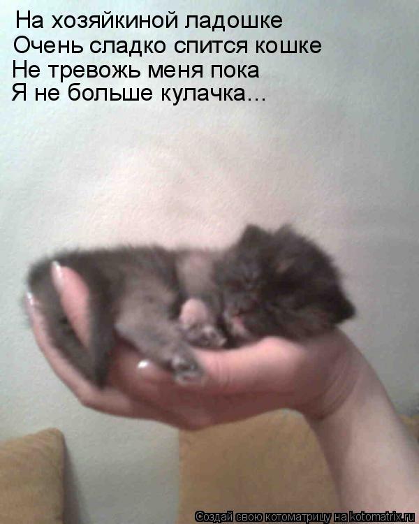 Котоматрица: На хозяйкиной ладошке Очень сладко спится кошке Не тревожь меня пока Я не больше кулачка...