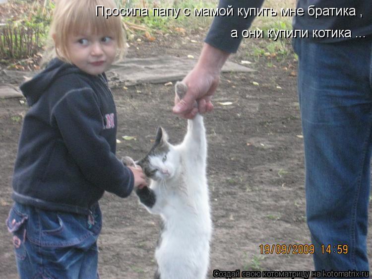 Котоматрица: Просила папу с мамой купить мне братика , а они купили котика ...