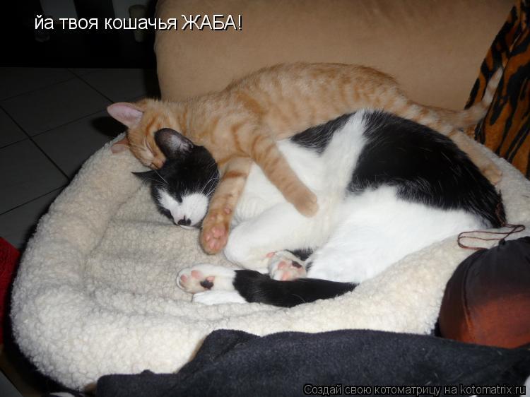 Котоматрица: йа твоя кошачья ЖАБА!