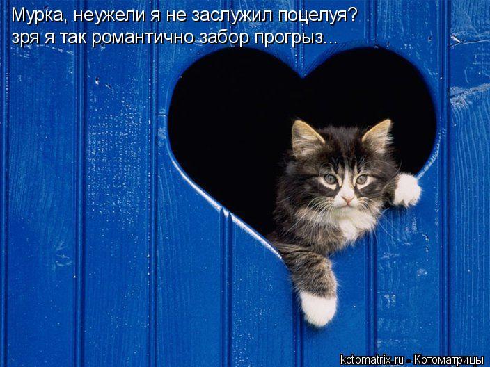 Котоматрица: Мурка, неужели я не заслужил поцелуя? зря я так романтично забор прогрыз...