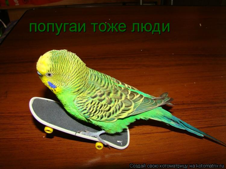 Котоматрица: попугаи тоже люди