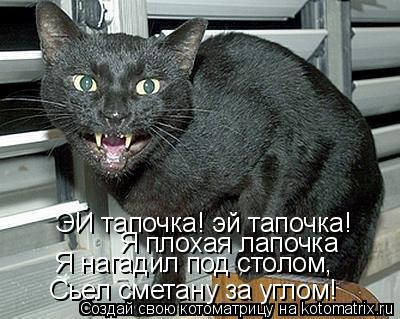 Котоматрица: ЭЙ тапочка! эй тапочка! Я плохая лапочка Я нагадил под столом, Сьел сметану за углом!