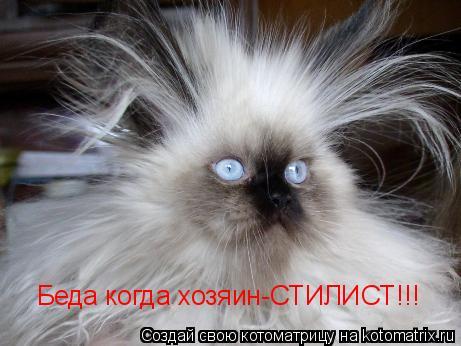 Котоматрица: Беда когда хозяин-СТИЛИСТ!!!