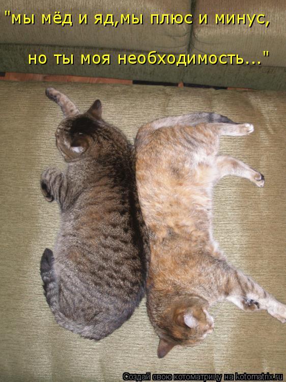 """Котоматрица: """"мы мёд и яд,мы плюс и минус, но ты моя необходимость..."""""""