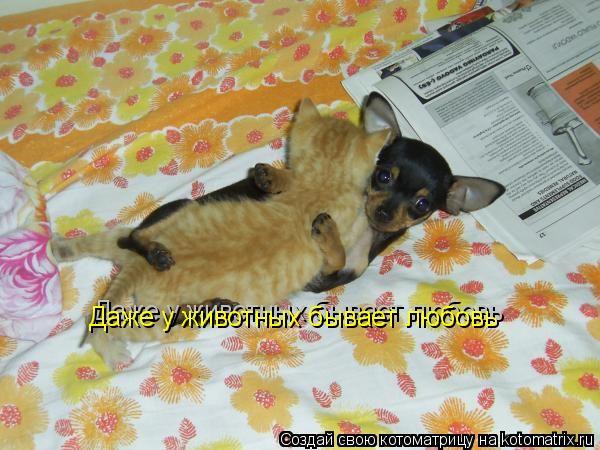 Котоматрица: Даже у животных бывает любовь Даже у животных бывает любовь