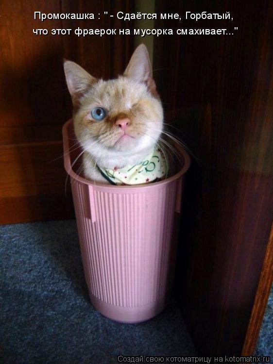 """Котоматрица: что этот фраерок на мусорка смахивает..."""" Промокашка : """" - Сдаётся мне, Горбатый,"""