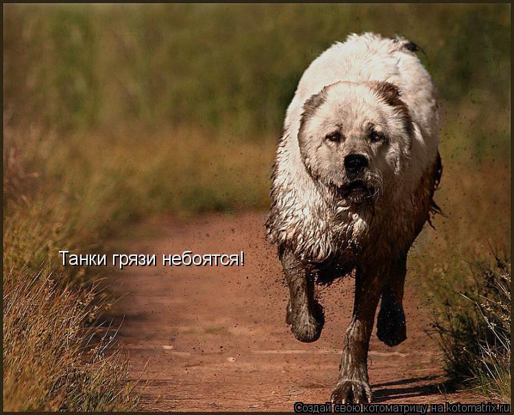 Котоматрица: Танки грязи небоятся!