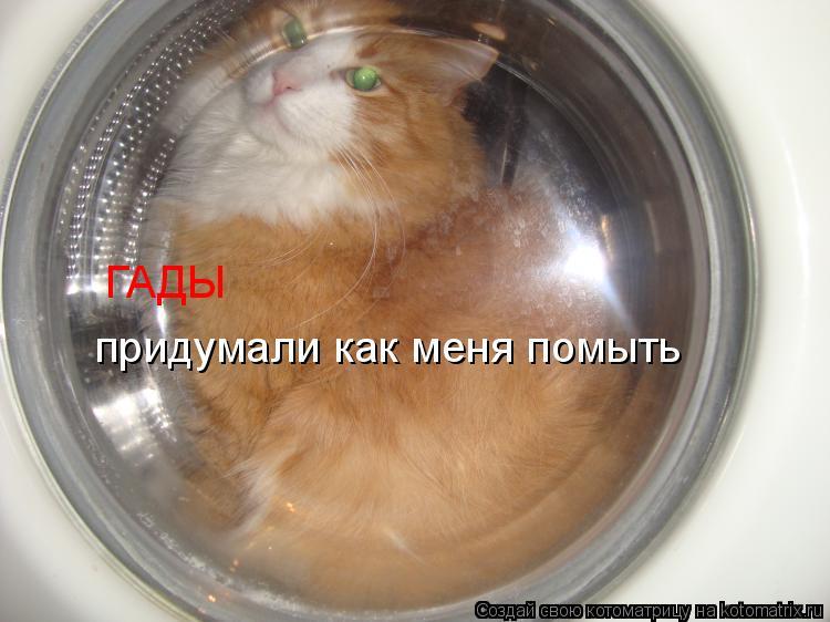 Котоматрица: ГАДЫ придумали как меня помыть
