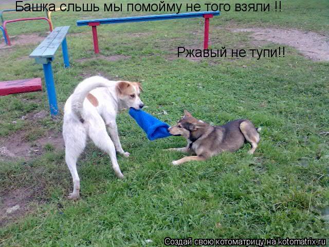 Котоматрица: Башка сльшь мы помойму не того взяли !! Ржавый не тупи!!