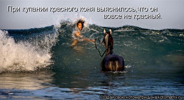 Котоматрица: При купании красного коня выяснилось,что он вовсе не красный.