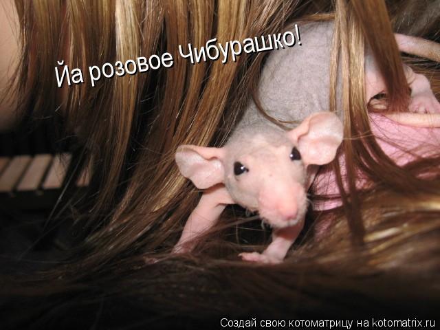 Котоматрица: Йа розовое Чибурашко!