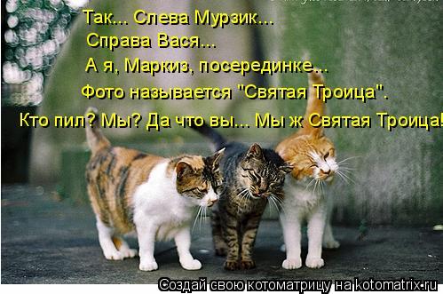 """Котоматрица: Так... Слева Мурзик... Справа Вася... А я, Маркиз, посерединке... Фото называется """"Святая Троица"""". Кто пил? Мы? Да что вы... Мы ж Святая Троица!"""
