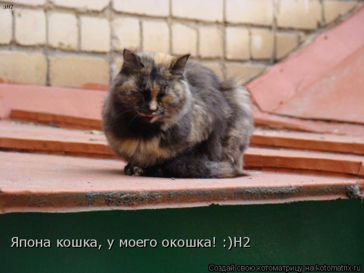 Котоматрица: Япона кошка, у моего окошка! :)Н2