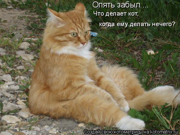 Опять забыл.... Что делает кот, когда ему делать нечего?