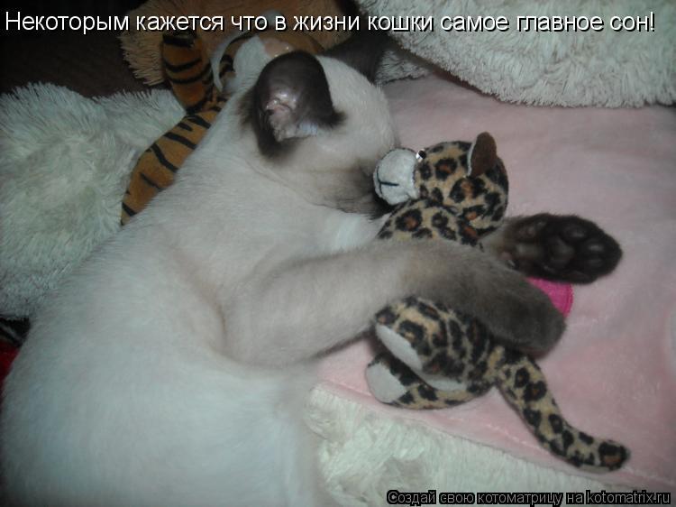Котоматрица: Некоторым кажется что в жизни кошки самое главное сон!