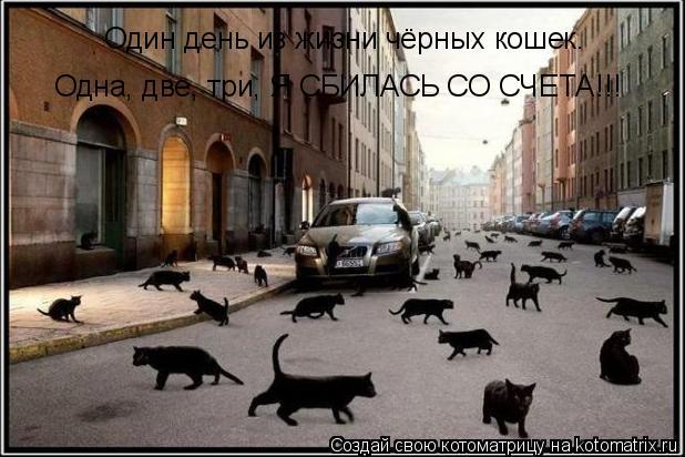 Котоматрица: Один день из жизни чёрных кошек. Одна, две, три, Я СБИЛАСЬ СО СЧЕТА!!!