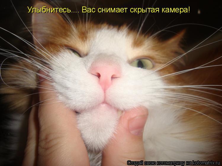 Котоматрица: Улыбнитесь.... Вас снимает скрытая камера!