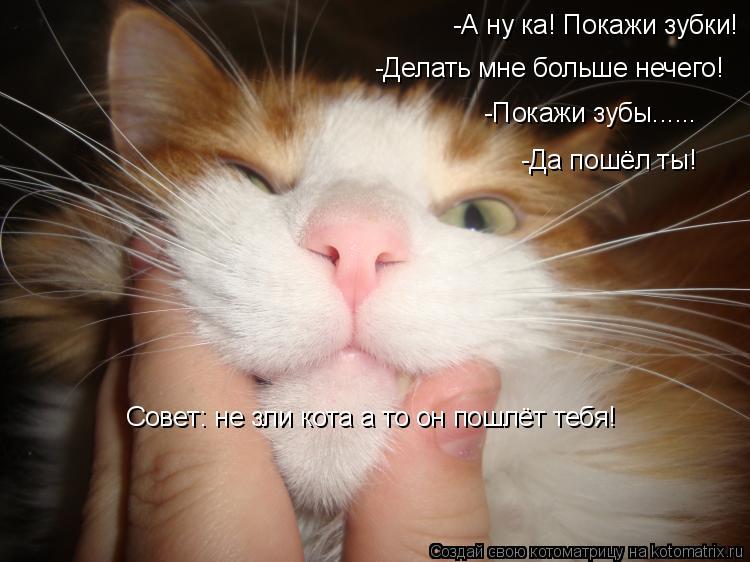 Котоматрица: -А ну ка! Покажи зубки! -Делать мне больше нечего! -Покажи зубы...... -Да пошёл ты! Совет: не зли кота а то он пошлёт тебя!