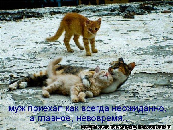 Котоматрица: муж приехал как всегда неожиданно, а главное, невовремя...