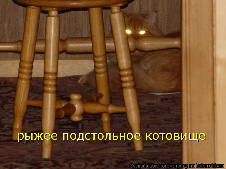 Котоматрица: рыжее подстольное котовище