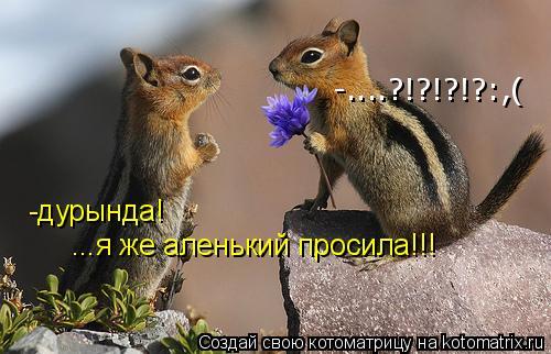 Котоматрица: -дурында! ...я же аленький просила!!! -....?!?!?!?:,(