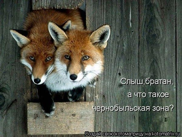 Котоматрица: Слыш,братан, а что такое чернобыльская зона?