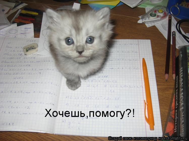 Котоматрица: Хочешь,помогу?!