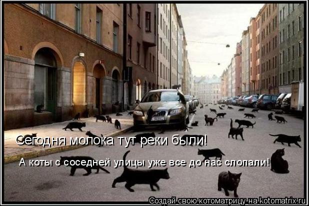 Котоматрица: Сегодня молока тут реки были! А коты с соседней улицы уже все до нас слопали!