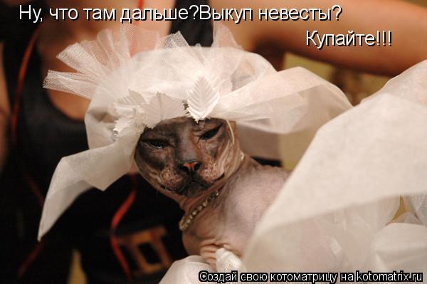 Котоматрица: Ну, что там дальше?Выкуп невесты? Купайте!!!