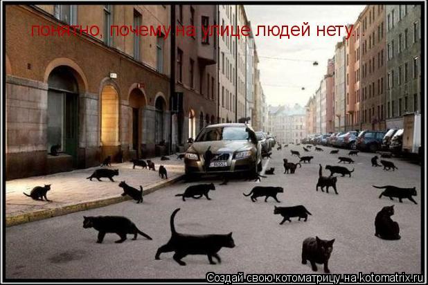 Котоматрица: понятно, почему на улице людей нету...
