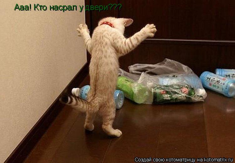 Котоматрица: Ааа! Кто насрал у двери???
