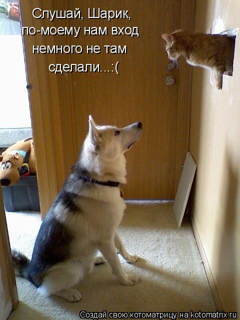 Котоматрица: Слушай, Шарик, по-моему нам вход  немного не там сделали...:(