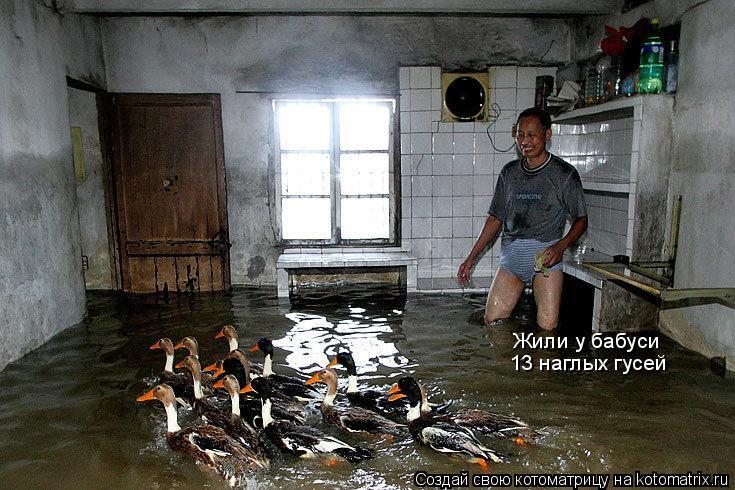Котоматрица: Жили у бабуси 13 наглых гусей
