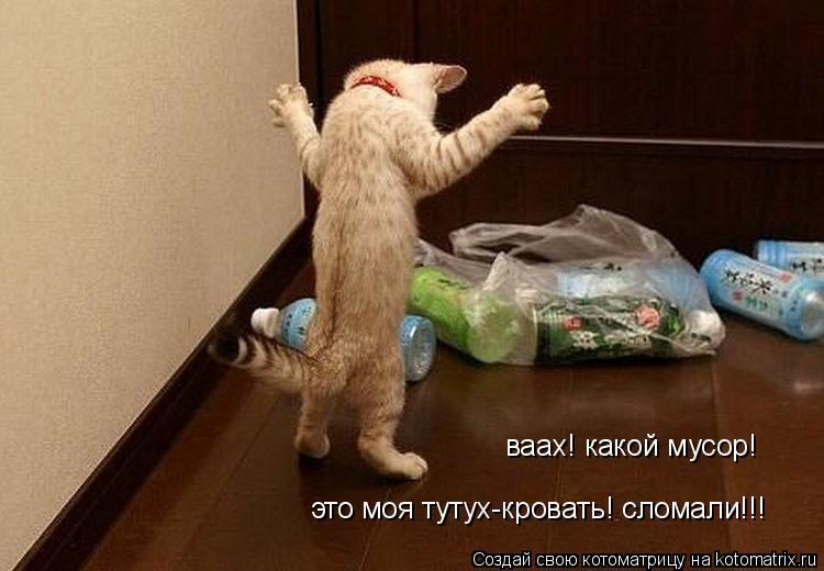 Котоматрица: ваах! какой мусор! это моя тутух-кровать! сломали!!!