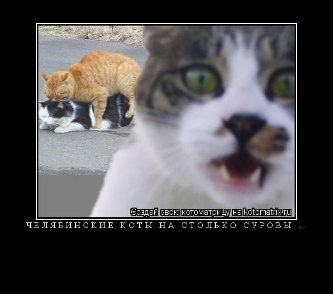 Котоматрица: Челябинские коты на столько суровы...