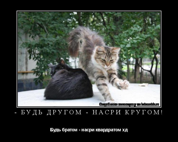 Котоматрица: - Будь другом - насри крУгом! Будь братом - насри квардратом хд