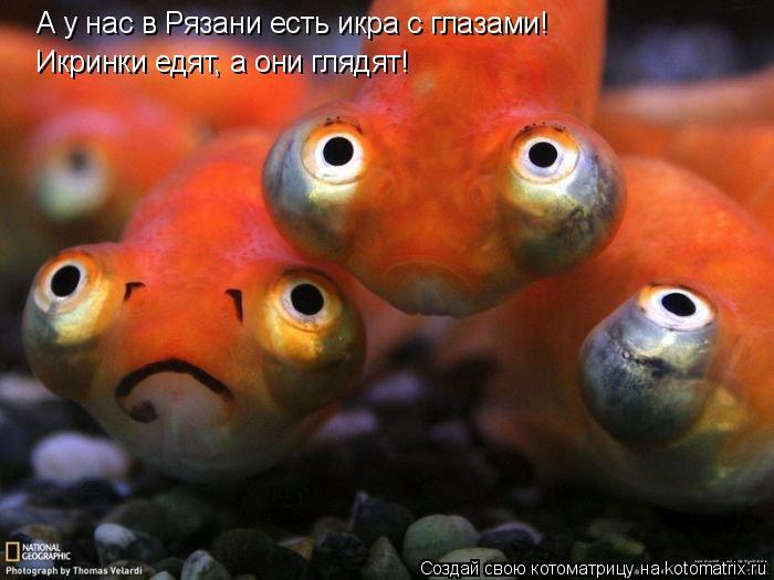 Котоматрица: А у нас в Рязани есть икра с глазами! Икринки едят, а они глядят!